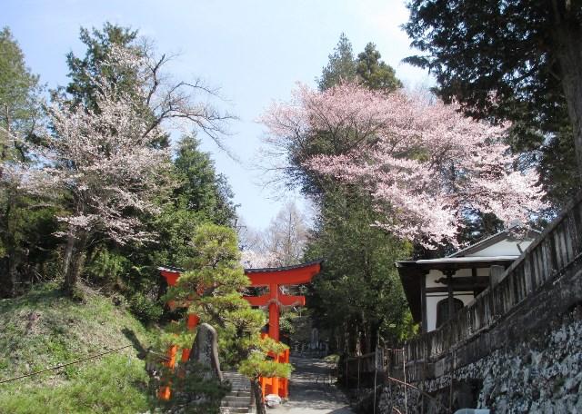 薮原神社の春